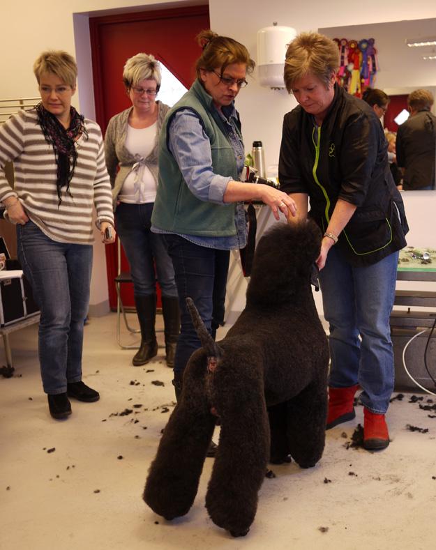 Lena Jönsson visar hur man klipper Pudel.