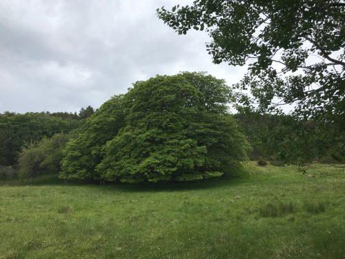 Storlønna Aunøya