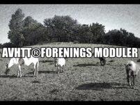 AVHTT® Certificering og Forenings modul