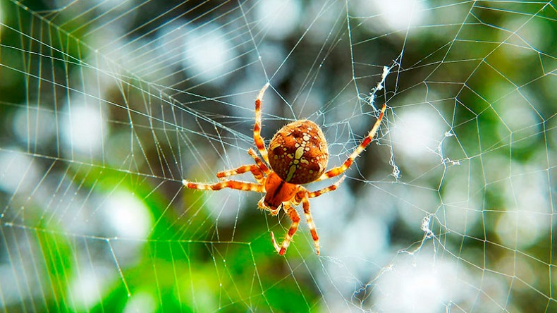 Spider Control Services AweSomePest