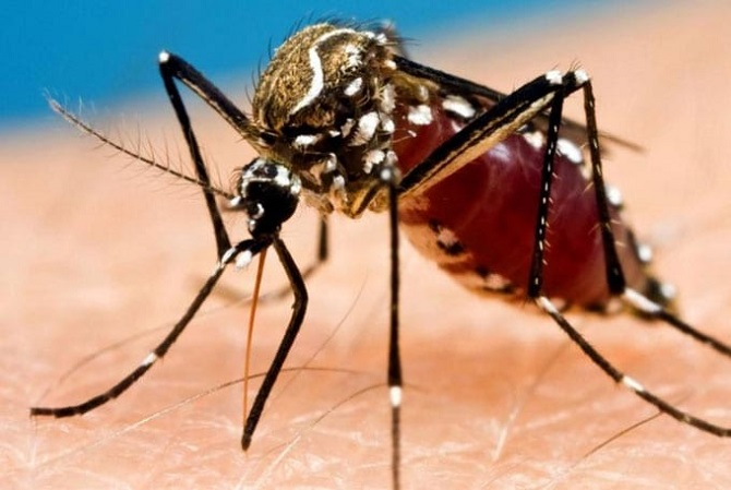 Mosquitoes Control Services AweSomePest