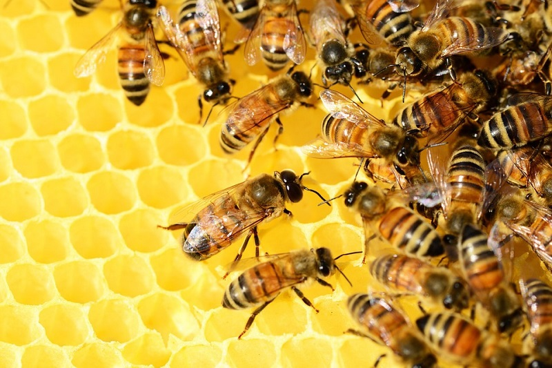 Bees Control Brampton Asesomepest