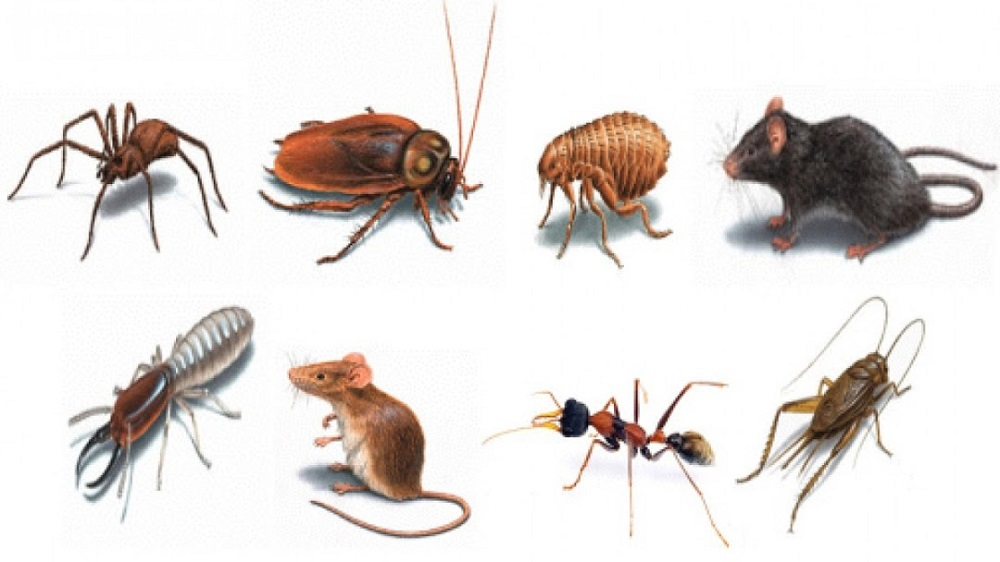 Commercial Pest Control Brampton Awesomepest