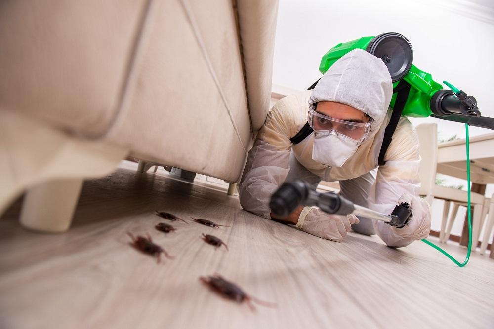Pest Control Toronto AweSomePest
