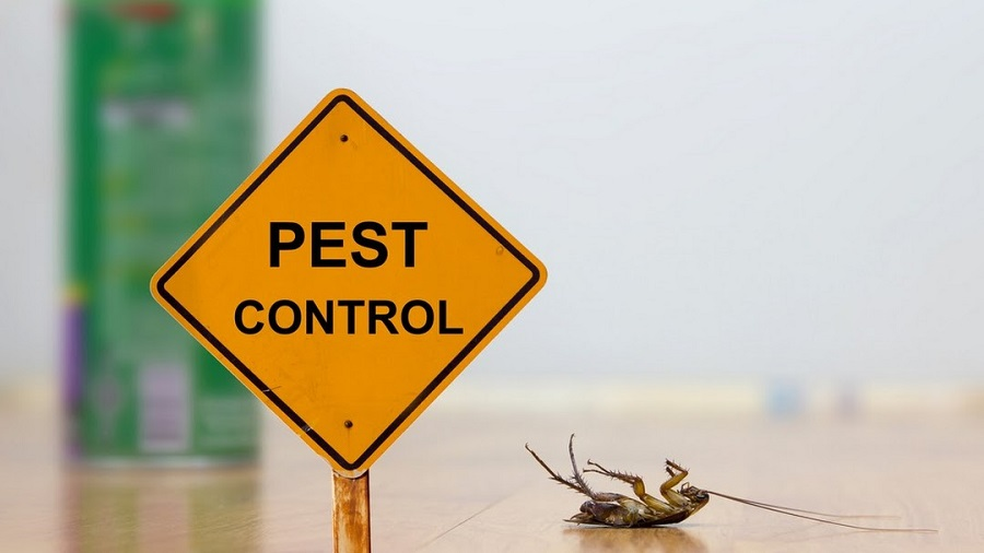 Pest control Services Brampton AwesomePest