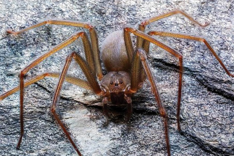 Spiders Control Brampton Awesomepest