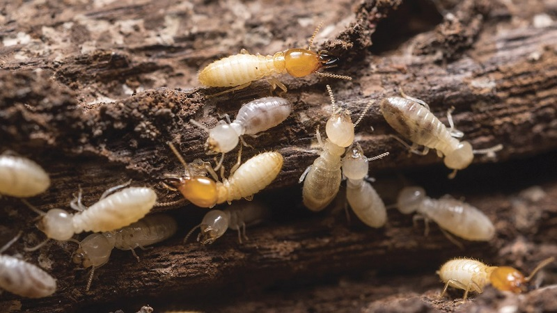 Termite Protection Awesomepest