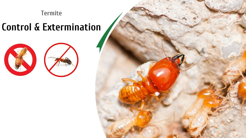 Termite Control Awesomepest
