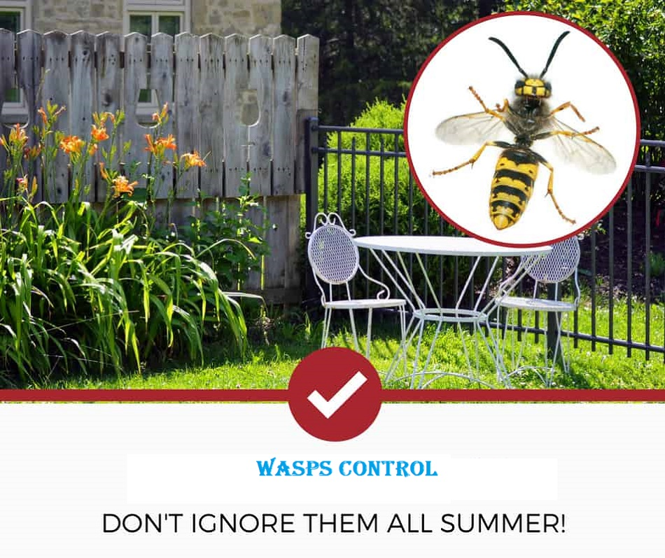 Wasps Control Services AweSomePest