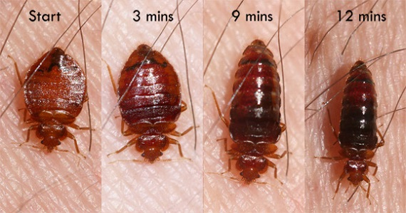 Bed Bugs AweSomePest