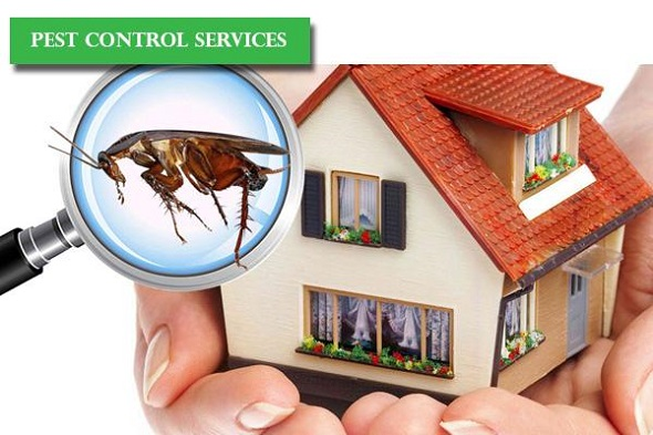 Home Pest Control Services AweSomePest