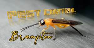 Pest Control Brampton Awesomepest