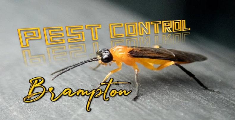 pest control Brampton AwesomePest
