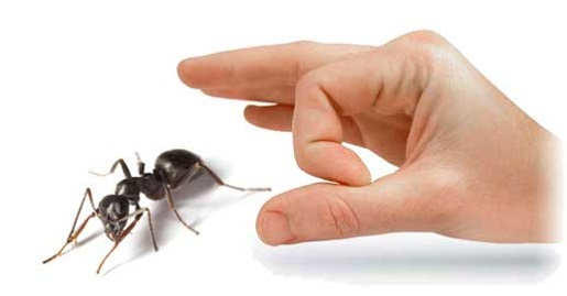 Pest Control Services Maple Awesomepest