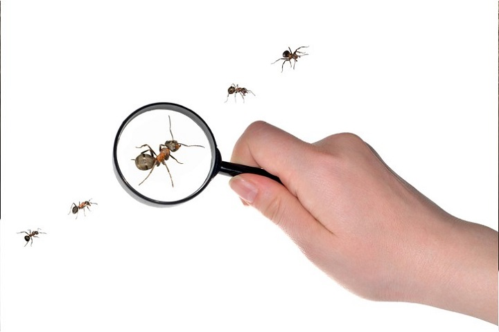 Pest Control Mississauga AwesomePest Control Ants Control