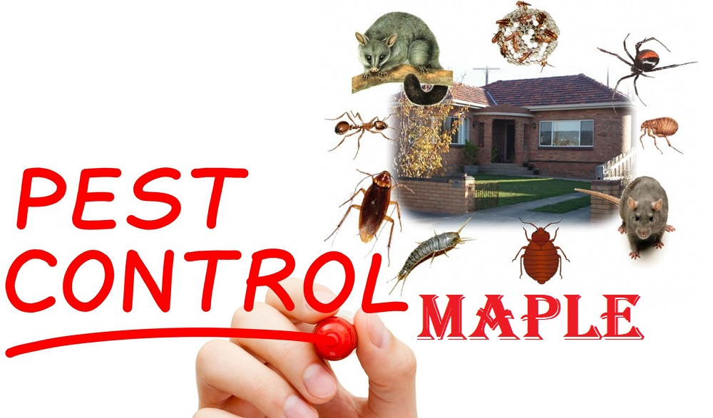 Pest Control Maple AwesomePest Control