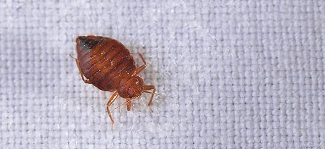 Get Rid of Bed Bugs Awesomepest