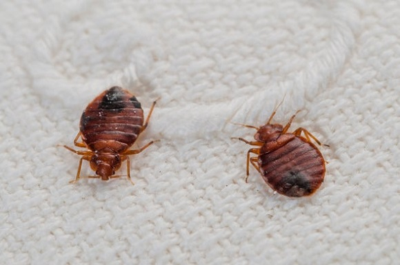 Pest Control Mississauga AwesomePest Control  Cockroaches Control Services
