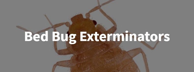 Bed Bugs Exterminators Toronto Awesomepest