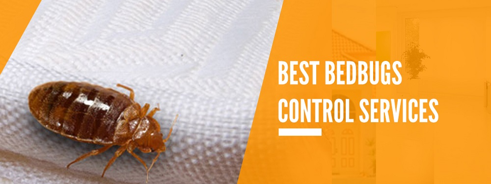 Bed Bugs Control Services Maple Awesomepest