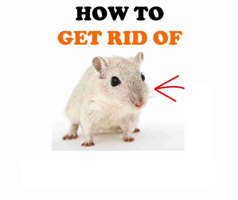 Get Rid of Mice AwesomePest