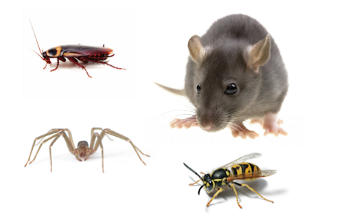 Pest Control Mice Extermination Maple AwesomePest Control