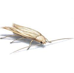 Close up moth illustration