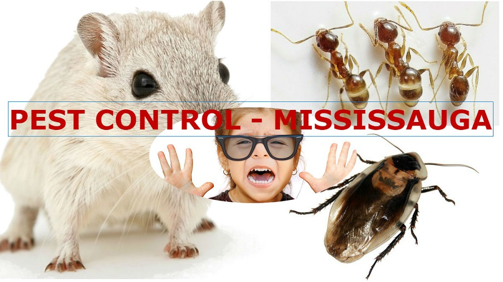 Most Common Pests in Mississauga
