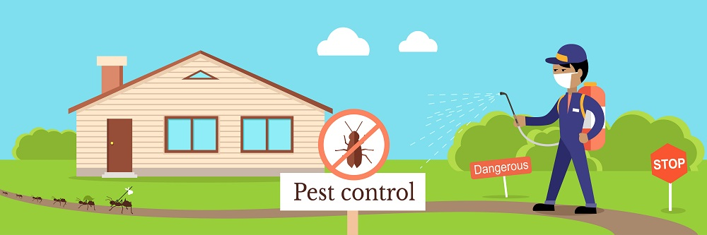 Most Common Pests in Mississauga AwesomePest