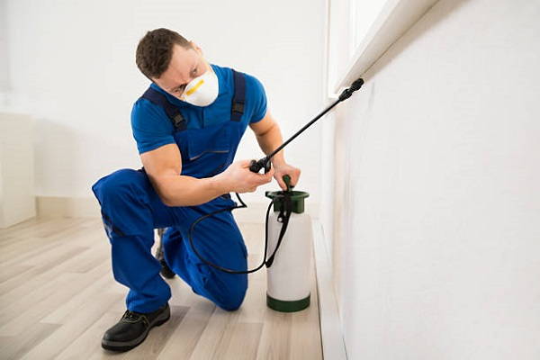 Pest Control Mississauga Awesomepest
