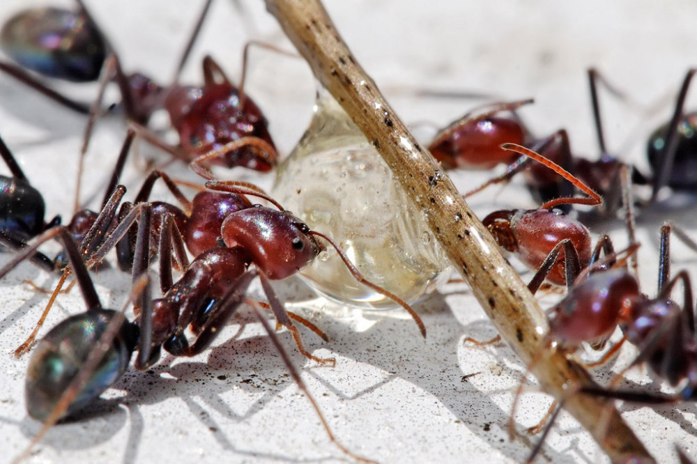 Ants Control Services Awesomepest