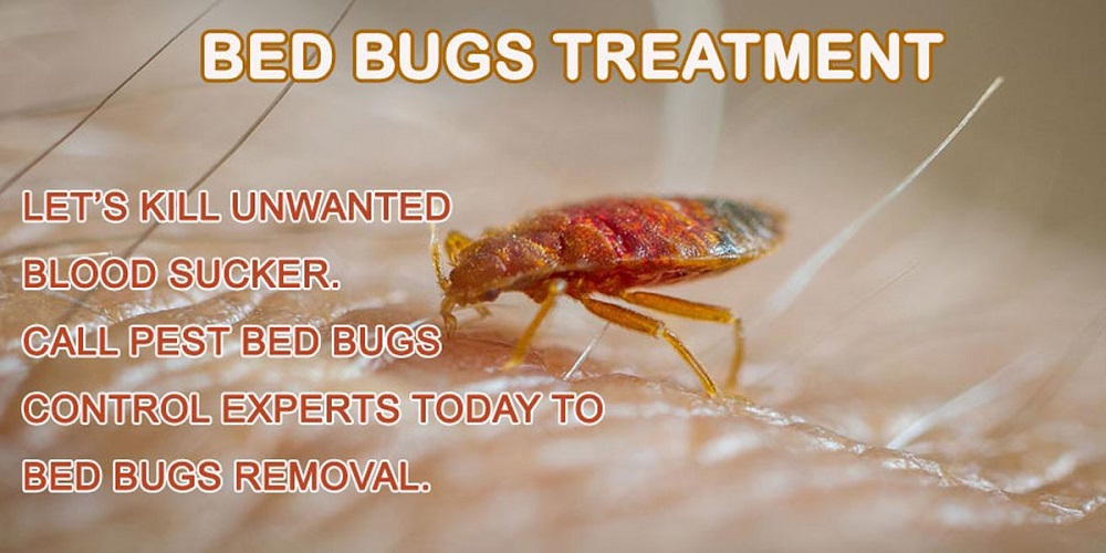 BedBugs Treatment Awesomepest