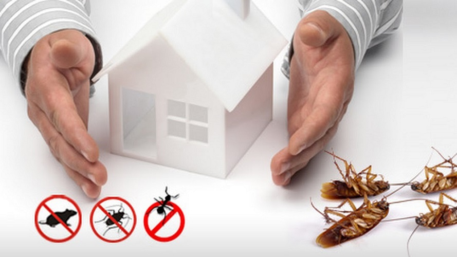 Awesomepest Pest Control Services Toronto