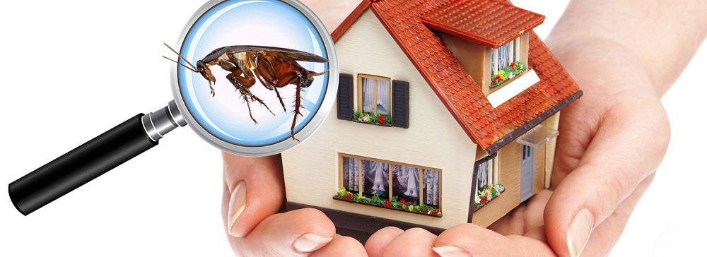 Pest Control Services Toronto Awesomepest