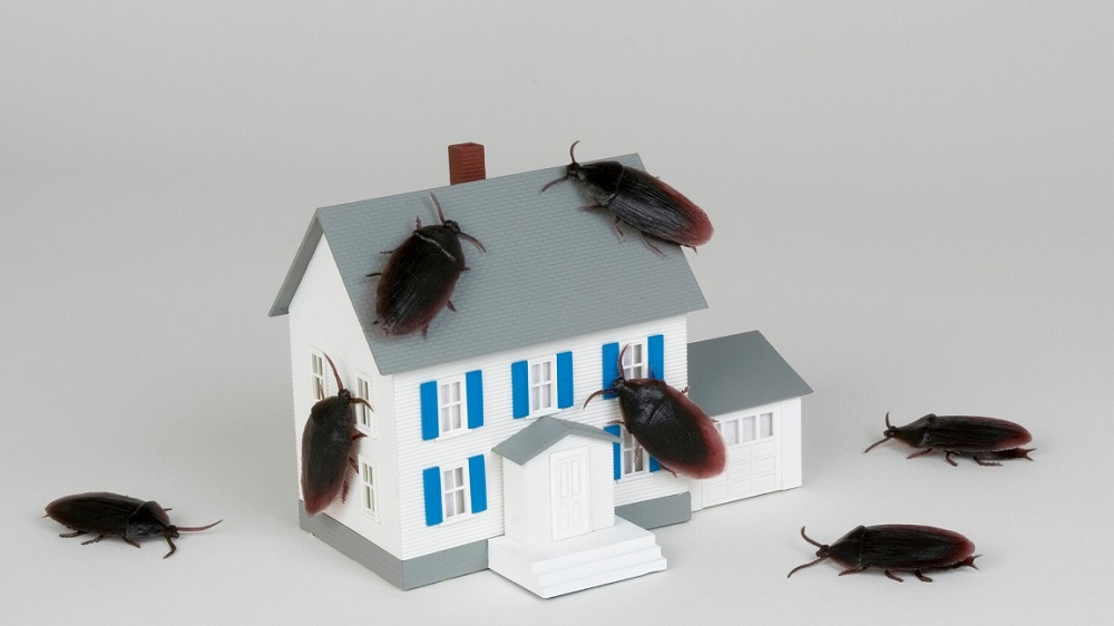 Cockroaches Control Services Awesomepest