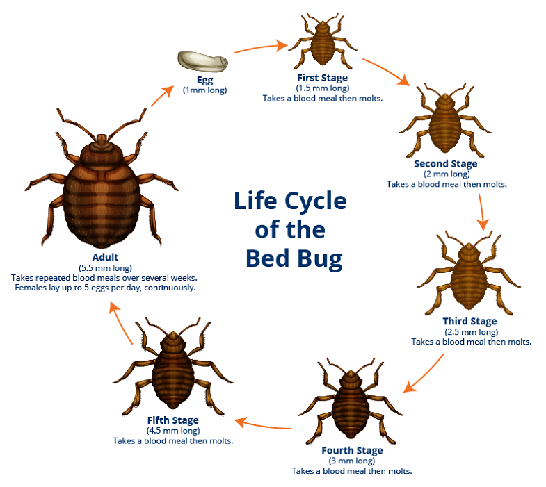 Facts about Bad Bugs
