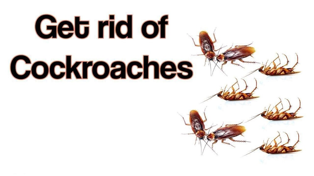How to Get Rid of Cockroaches Awesomepest