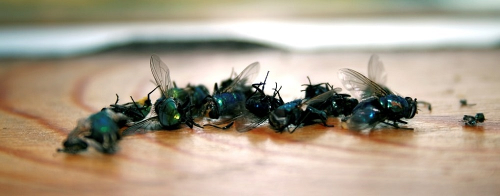 Flies Control Services Toronto Awesomepest
