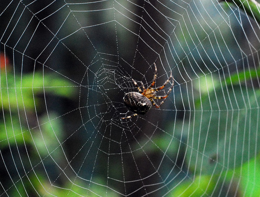 Spiders Web Awesomepest