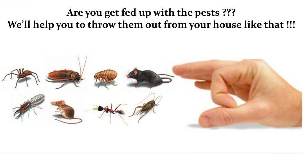 Most Common Pests in Vaughan Awesomepest