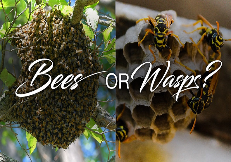 Wasps Control Services Toronto Awesome Pest
