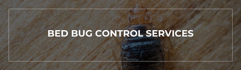 Awesome Pest Control Services Bed Bugs COntrol Services