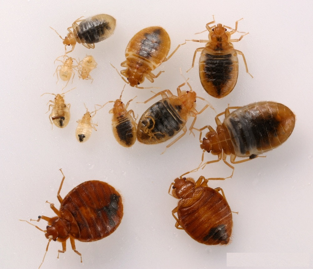 Awesome Pest Awesomepest Bed Bugs