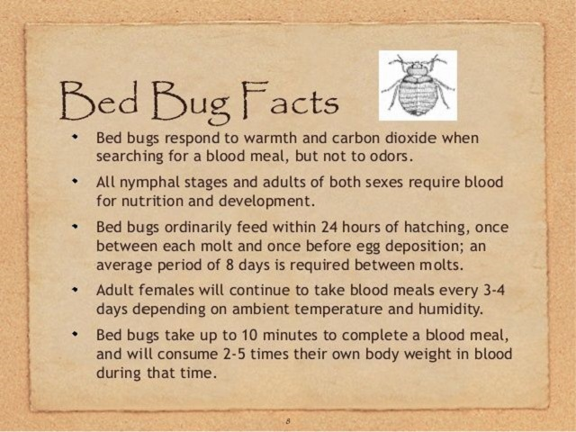 Awesomepest Interesting Facts about Bed Bugs