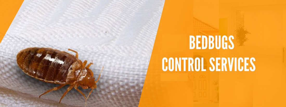 Bed Bugs Control Services Awesome Pest Control
