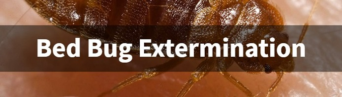 Bed Bugs Extemination Awesomepestcontrol