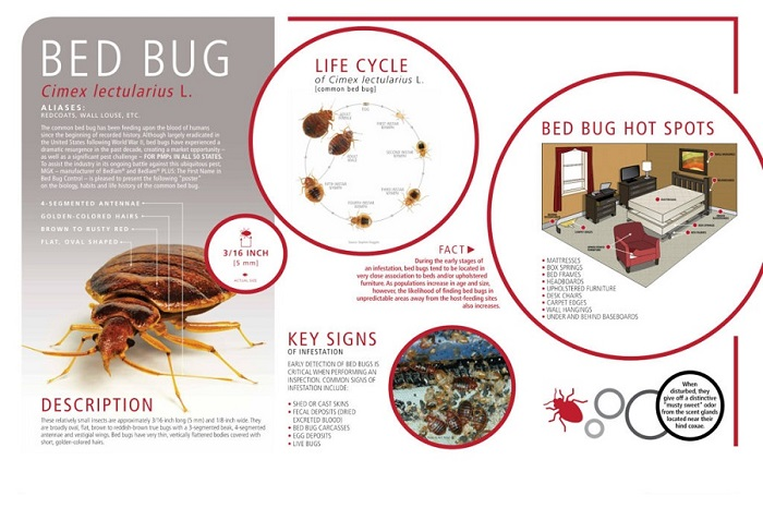 Habits of Bed Bugs Awesomepest