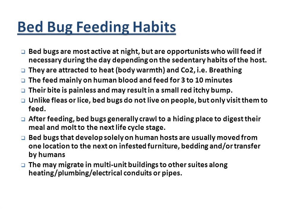 Feeding Habits of Bed Bugs Awesomepest