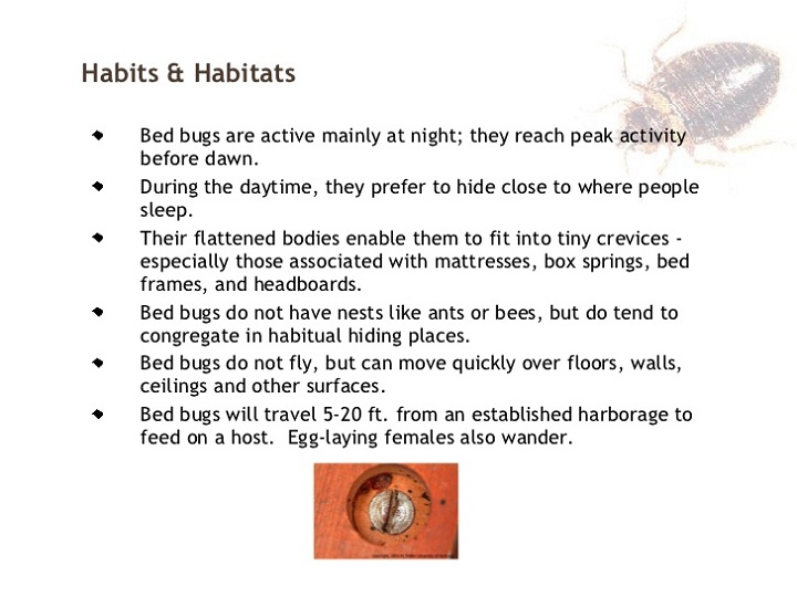 Habits & Habitats of Bed Bugs by Awesomepest