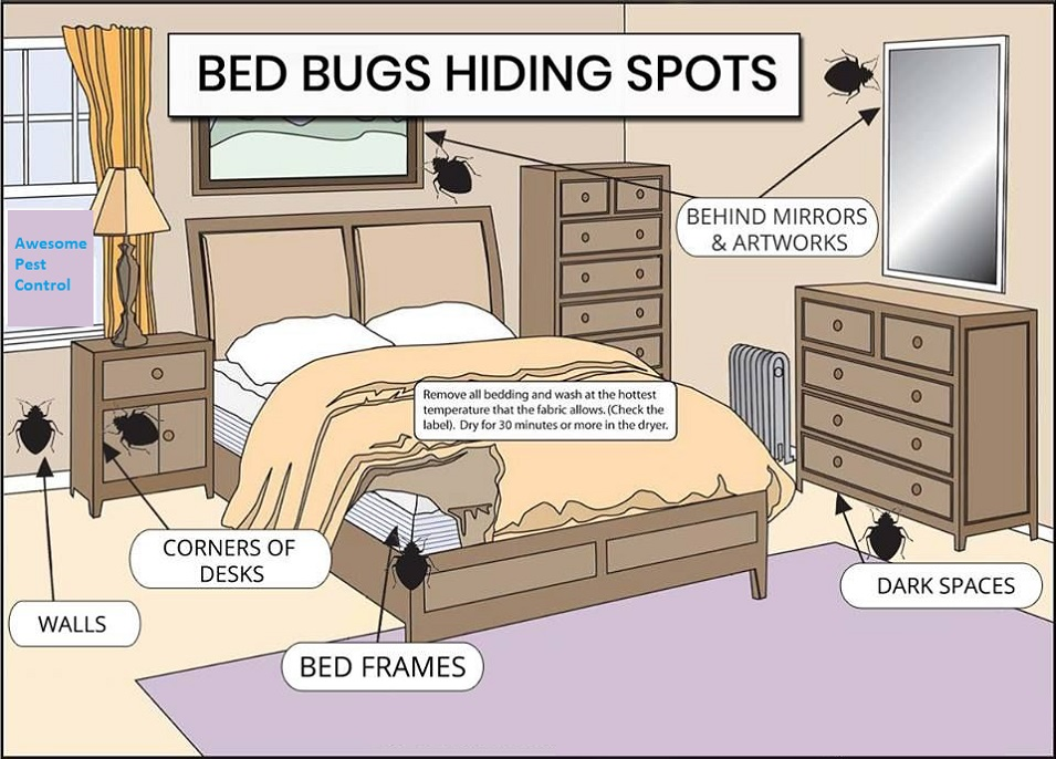 Hiding Spots of Bed Bugs Awesomepest